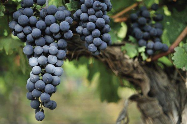 Кагор десертное вино